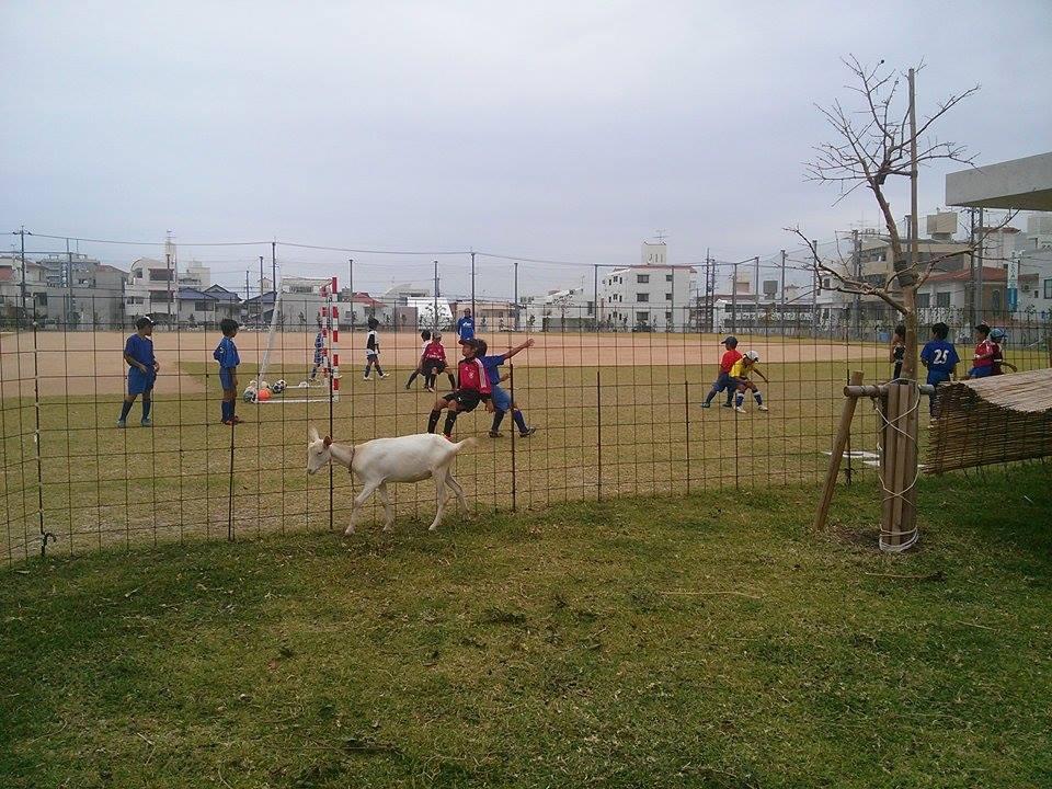 美ら島サッカーキャンプ